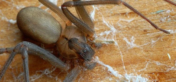 Spider Control Scarborough