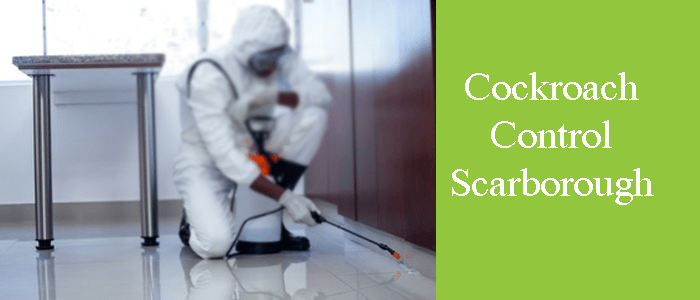 Cockroach Extermination Services in Scarborough